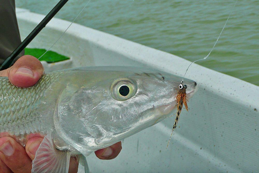 bonefish1.jpg