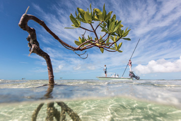 saltwater1.jpg